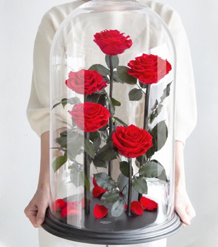 胡蝶蘭にかわる新しい花贈り