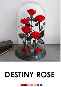 DESTINY ROSE